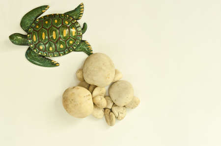 Texture turtle and stone arranged by concepts Stock Photo - 17870193