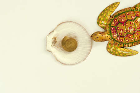 Texture turtle and shell arranged by concepts Stock Photo - 17870189
