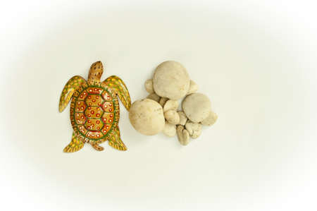 Texture turtle and stone arranged by concepts Stock Photo - 17870186