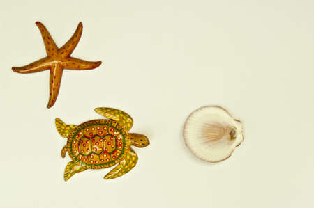 Texture turtle starfish and shell arranged by concepts Stock Photo - 17870192