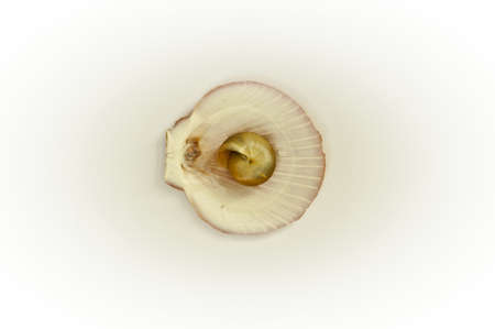 Texture shell arranged by concepts Stock Photo - 17983878