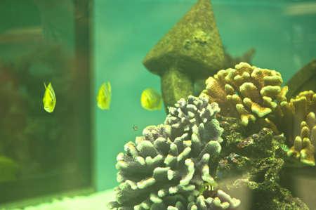 Coral and fish in the aquarium Stock Photo - 19242829