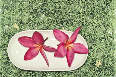 greenish: Pink flowers and plate on the grass