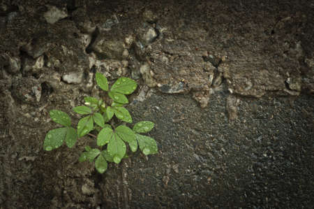 Small tree sprouting through wall Stock Photo