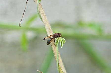 endangering: Wasp on tree