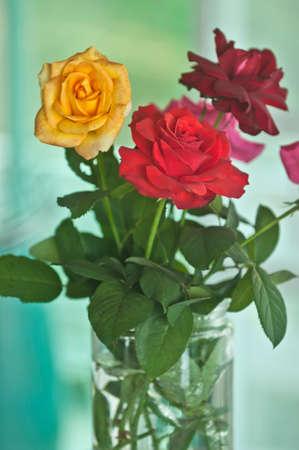 botanica: Many color rose flowers