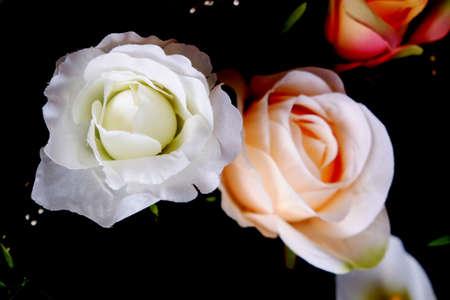 rose bush: Bouquet with rose bush