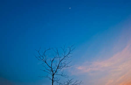 silhouette of dead tree and small moon photo