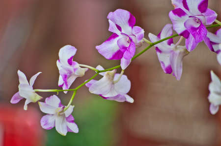 the existing: Beautiful orchid,naturally existing in Thailand Stock Photo