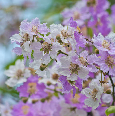 flower background. beautiful flowers Stock Photo