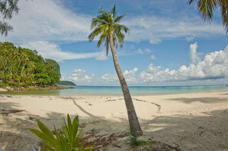 desert island: Desert island with palm tree on the beach Stock Photo