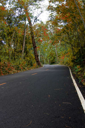 Forest road and autumn day
