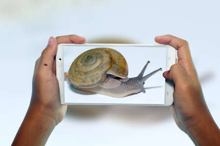 photography snail animals by phone