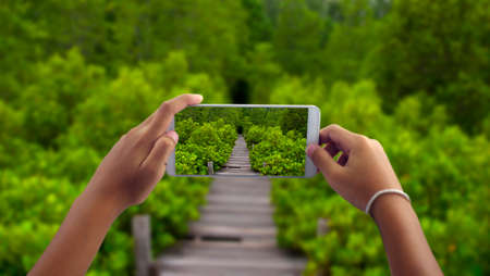 Travel concept, take photography Path in Mangrove forest by phone gallery Stock Photo