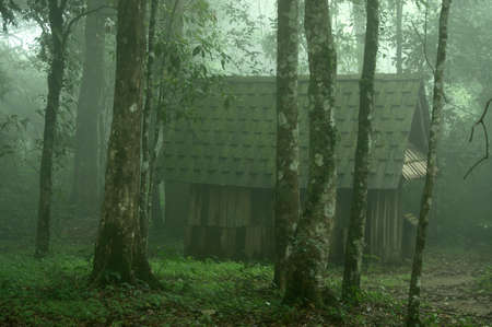 안개 속에서 깊은 숲에 집입니다. 태국