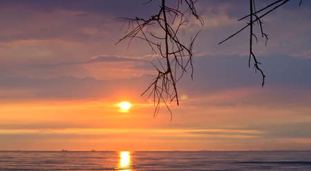 Extremely beautiful sunset and branch on beach Stock Photo