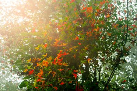 maple leaves on autumn season Stock Photo
