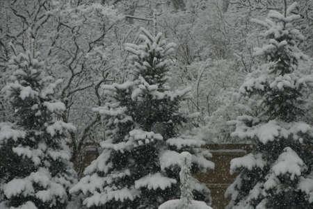 Snowfall Stok Fotoğraf