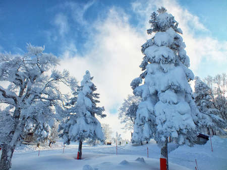 Yamagata frozen trees snow monsters and ski slope at mt.zao