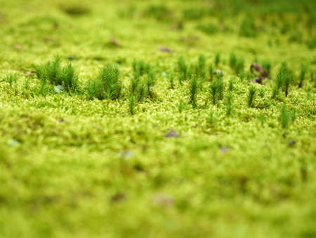Close up moss on the ground