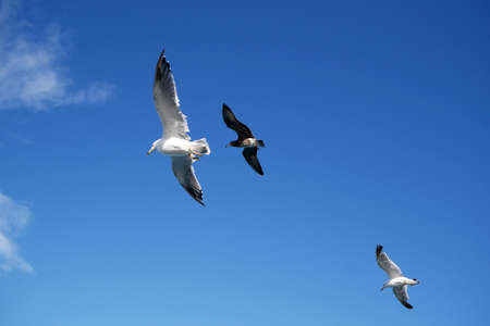 Seagull fly with blue sky background