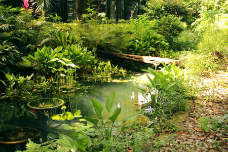 Little pond in the Hong Kong botanical garden surrounded by fern bushes and other plants photo