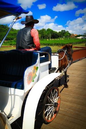 the coachman: Thai horse carriage