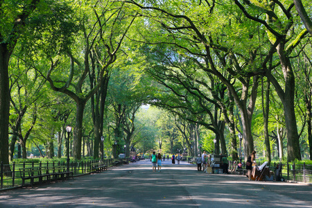 The Mall in Central Park, New York City, in summer. NEW YORK, USA: AUGUST 16, 2012.