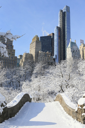heavy snow: Central Park with heavy snow