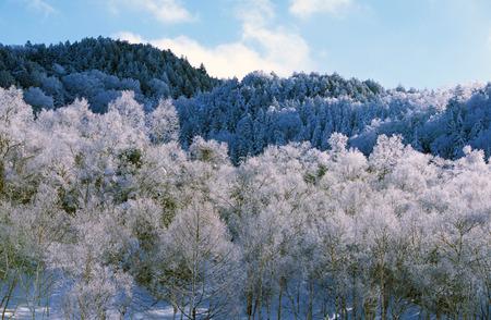 Clear winter day at Mt. Yokote, Japan Stok Fotoğraf