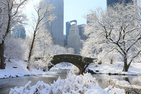 Winter Scenery in New York, Central Park Фото со стока