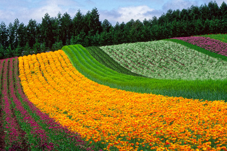 In the Flower Garden in Hokkaido, Japan Archivio Fotografico