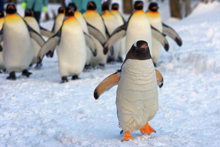 ペンギン散歩 写真素材 - 87150752