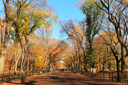 Autumn Scenery in Central Park, NYC Stockfoto