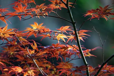 Landscape in Kyoto, Keage, Higashiyama
