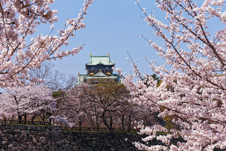 Osaka Castle with full blooming cherry blossom in spring