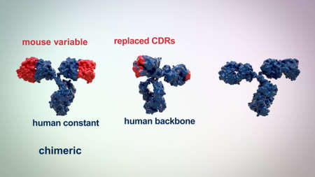 medically accurate 3d animation of an antibody