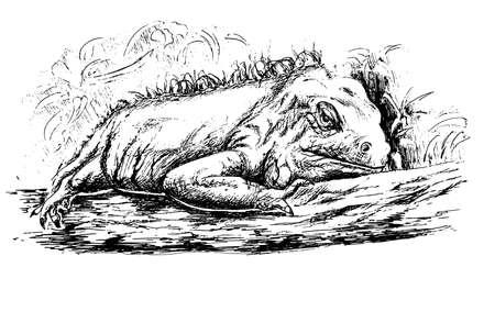 Wild iguana digital illustration Banque d'images