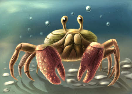 Pretty crab digital drawing