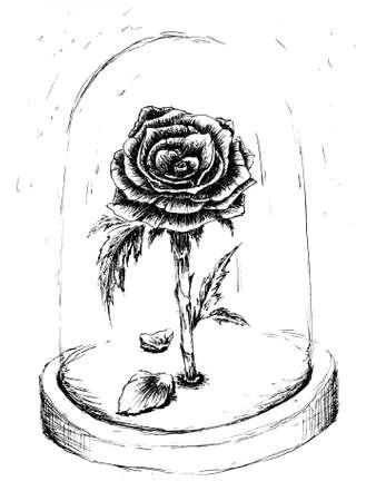 Magic rose ink drawing