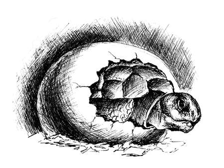 Newborn turtle ink drawing Banque d'images