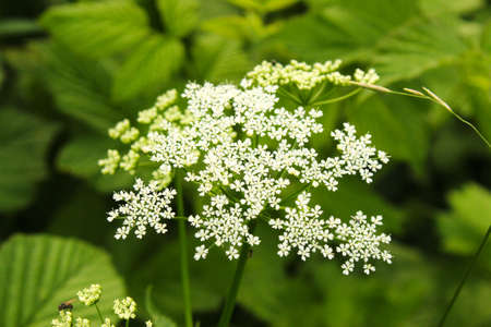 white flower on the green field