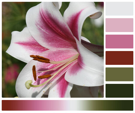 complimentary: Lily Flower. Palette With Complimentary Colour Swatches