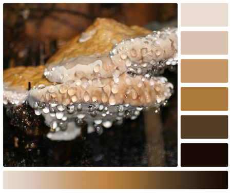 complimentary: Dew Drops On Mushrooms. Palette With Complimentary Colour Swatches