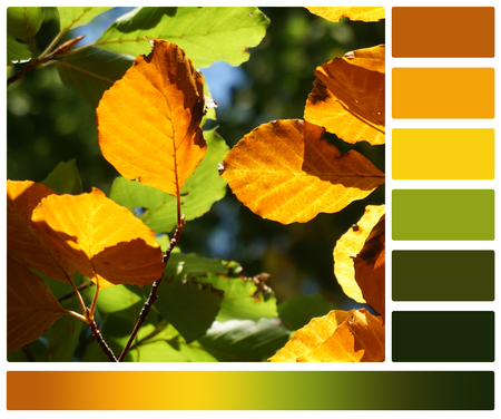 autumn colour: Autumn Beech Leaves. Palette With Complimentary Colour Swatches. Stock Photo