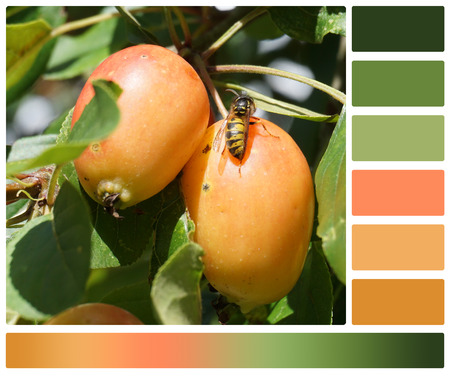 complimentary: Apple Tree. Bee Or Wasp. Palette With Complimentary Colour Swatches. Stock Photo