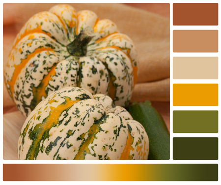 dark pastel green: Organic Harlequin Squash. Zucchini. Wooden Board. Palette With Complimentary Colour Swatches.