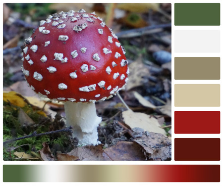 complimentary: Red Amanita Fly-Agaric Mushroom, Leaves In Forest. Palette With Complimentary Colour Swatches.