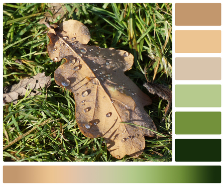 swatches: Oak Leaf On Grass. Palette With Complimentary Colour Swatches. Stock Photo