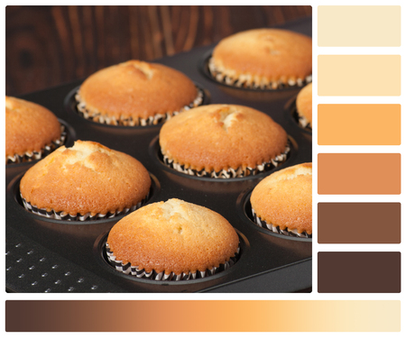 complimentary: Plain Cupcakes In Baking Tray. Palette With Complimentary Colour Swatches. Stock Photo